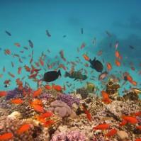 Egypt, Hurghada - snorkelling